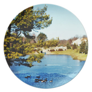 Gansos que nadan en el lago a medias congelado plato de comida