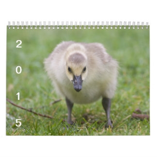 Gansos salvajes 2015 - calendario del ganso