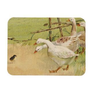 Gansos y vintage Pascua del polluelo Imán Flexible