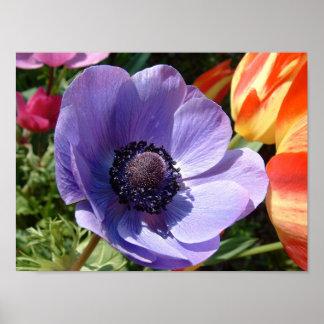 Garden Beauty Closeup Poster
