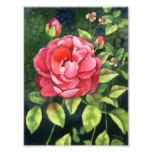 Garden Beauty - Floral Art Print Photo Print