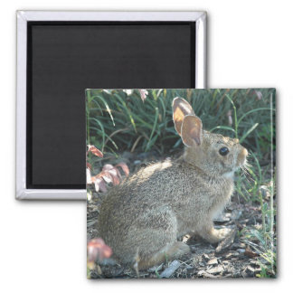 Garden Bunny 2 Inch Square Magnet