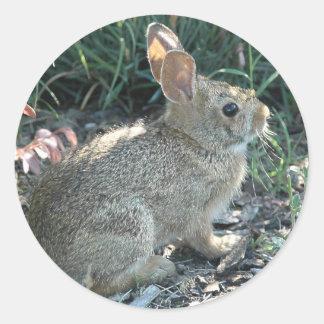 Garden Bunny Classic Round Sticker