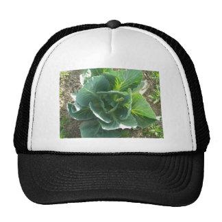 Garden Cabbage Trucker Hat
