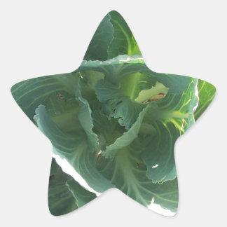 Garden Cabbage Star Sticker