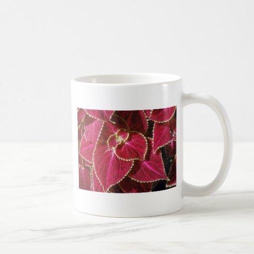 Garden Coleus (Coleus Hybridus) flowers Classic White Coffee Mug