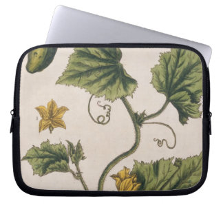 Garden Cucumber, plate 4 from 'A Curious Herbal', Laptop Sleeve