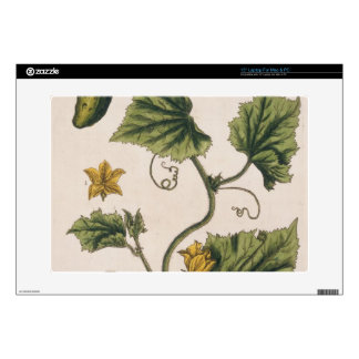 """Garden Cucumber, plate 4 from 'A Curious Herbal', Decal For 15"""" Laptop"""