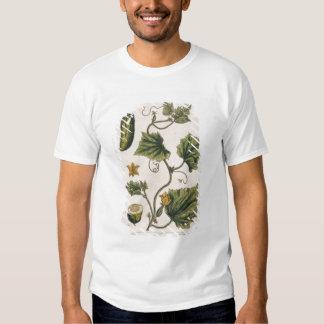 Garden Cucumber, plate 4 from 'A Curious Herbal', T Shirt