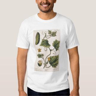 Garden Cucumber, plate 4 from 'A Curious Herbal', Tee Shirt