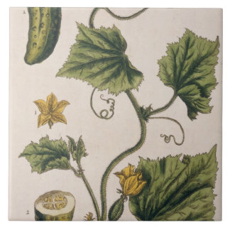 Garden Cucumber, plate 4 from 'A Curious Herbal', Tile