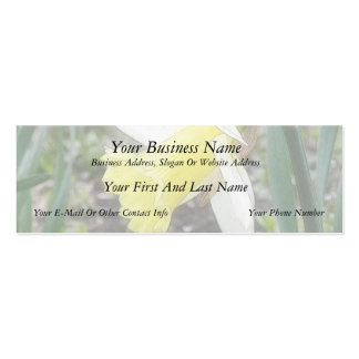 Garden Daffodil In Early Spring Double-Sided Mini Business Cards (Pack Of 20)