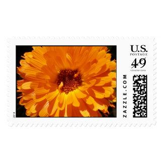Garden Delight Postage Stamp