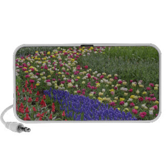 Garden design of Grape Hyacinth, and tulips, iPhone Speaker