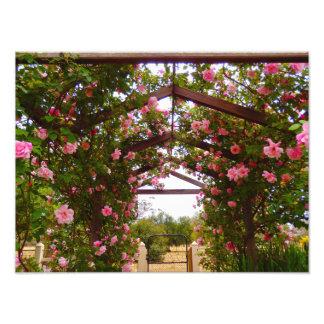 Garden Entry Photo Print