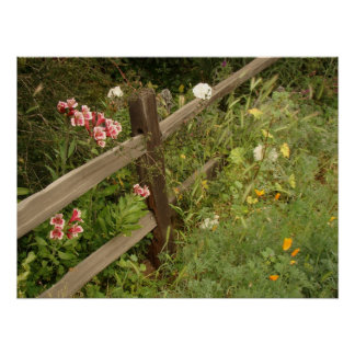 Garden Fence Print