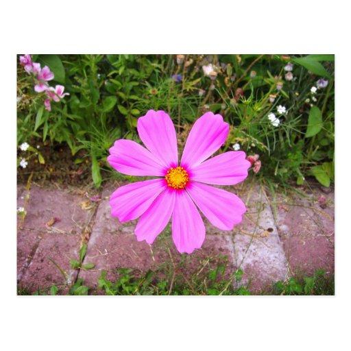 Garden Flower-1-postcard Postcard