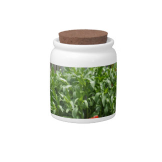 Garden Flowers at Fence Candy Jars