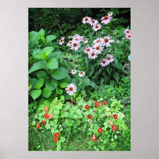 Garden Flowers Coneflower Nasturtium Poster