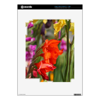 Garden gladiolus (Gladiolus x hortulanus) Decal For iPad 2