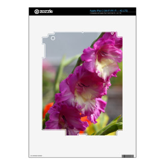Garden gladiolus (Gladiolus x hortulanus) Decal For iPad 3