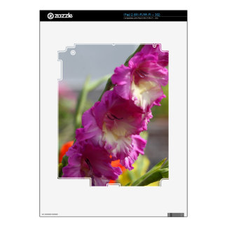 Garden gladiolus (Gladiolus x hortulanus) Decals For iPad 2