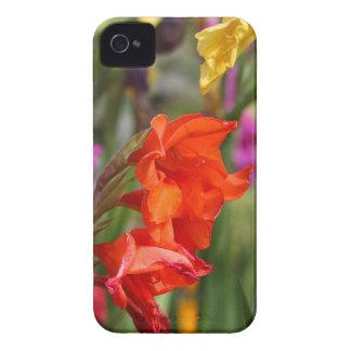 Garden gladiolus (Gladiolus x hortulanus) iPhone 4 Case