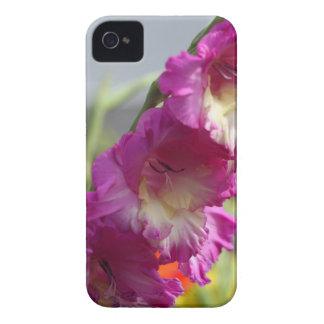 Garden gladiolus (Gladiolus x hortulanus) iPhone 4 Case-Mate Case