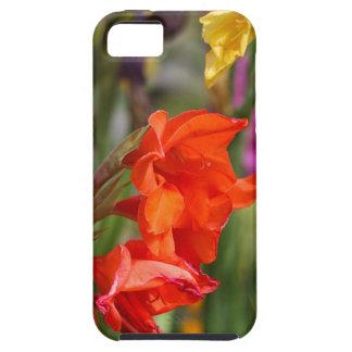 Garden gladiolus (Gladiolus x hortulanus) iPhone SE/5/5s Case