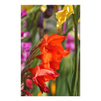 Garden gladiolus (Gladiolus x hortulanus) Stationery