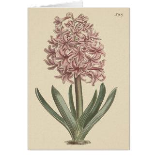 Garden Hyacinth Botanical Illustration Card