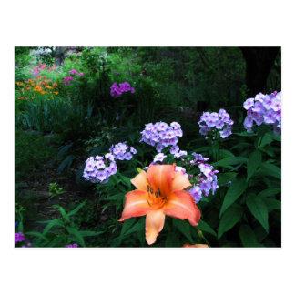 Garden in Light & Shadow Postcard