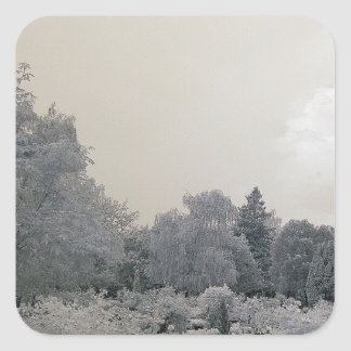 Garden/infrared photography square sticker