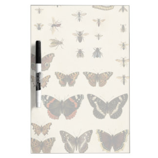 Garden Insects by Vision Studio Dry-Erase Board