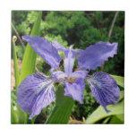 Garden Iris, Blue, 4.25 tile