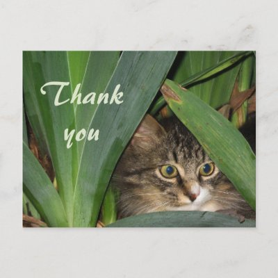 Garden Kitty post card $ 1.30