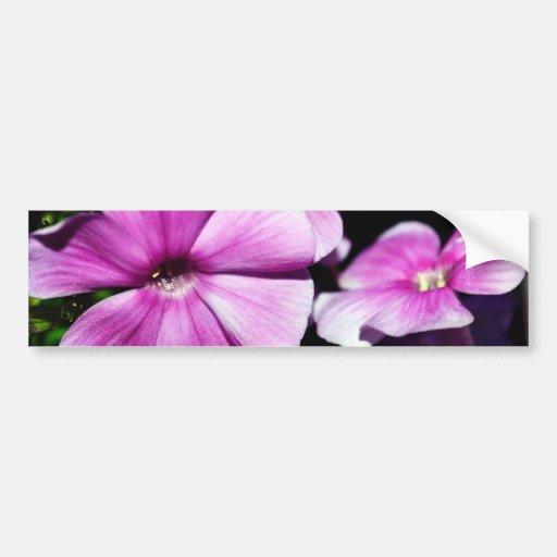 Garden Laura Phlox Flowers Car Bumper Sticker