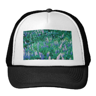 Garden lupines and buttercups, Quebec, Cana Mesh Hats
