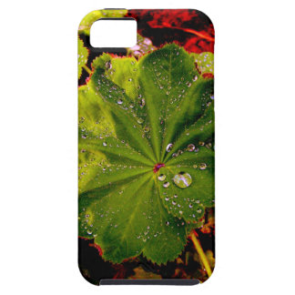 Garden, Nature iPhone 5 Cover