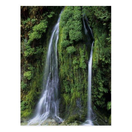 Garden of Eden Postcard
