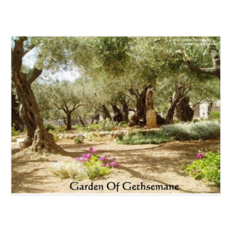 Garden Of Gethsemane Christian Gifts Tees Cards