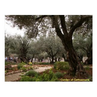 Garden of Gethsemane Post Card