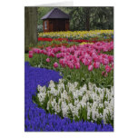 Garden of grape hyacinth, hyacinth and tulips, greeting card