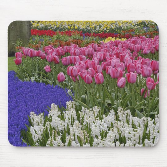Garden of grape hyacinth, hyacinth and tulips, mouse pad