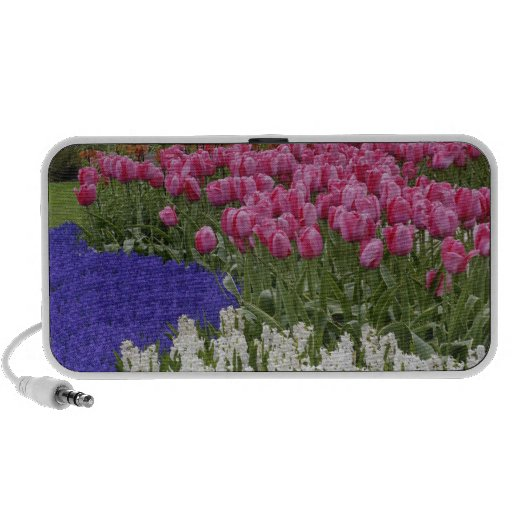 Garden of grape hyacinth, hyacinth and tulips, portable speaker