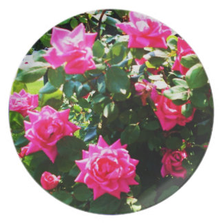 GARDEN OF PINK ROSES plate
