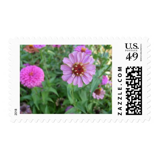 Garden of Purple Postage Stamps