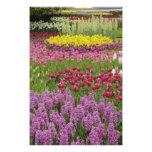Garden of tulips, daffodils, and hyacinth photo print