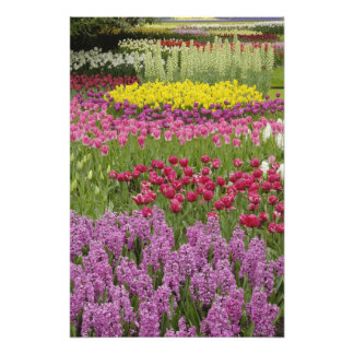 Garden of tulips, daffodils, and hyacinth photo print