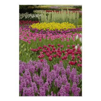 Garden of tulips, daffodils, and hyacinth poster
